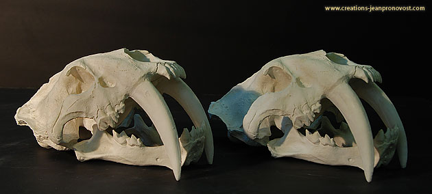 Moulage d'un crâne de tigre smilodon d'Amérique du sud - Sculpture et moulage à Montréal