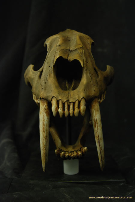 Tiger skull - saber tooth tiger skull - Molding sculpting, sculpture, Montreal