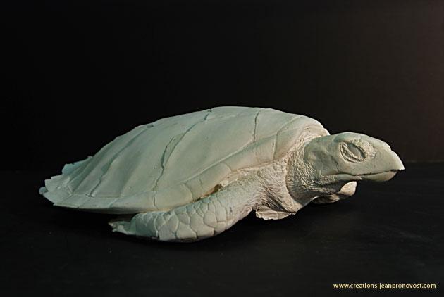 Moulage de tortue - sculpture et moulage Montréal